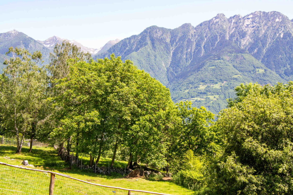 I boschi attorno al Borgo Selvapiana